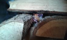 Podkrkonošský podpalovače z dřevité vlny, 1000ks,6cm cca +-11,4kg, hoří cca 6-10minut